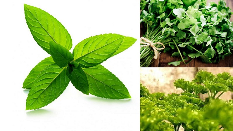 3 Health-Giving Herbs: Parsley, Cilantro, Peppermint
